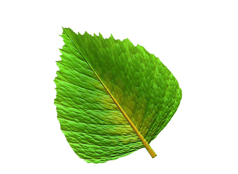 Grønt blad - Køb af bærbar computer